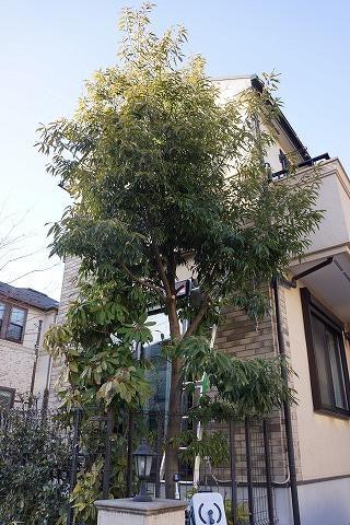 20130224 庭木 02.jpg