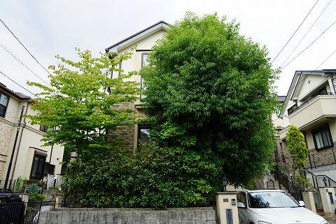 20150606 庭木 01.jpg