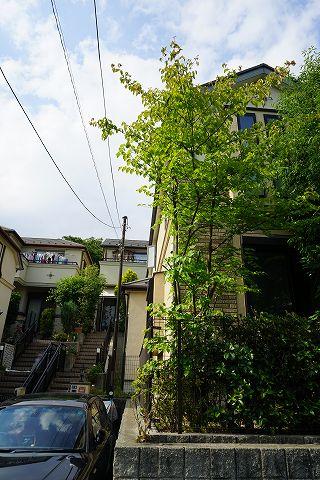 20150606 庭木 07.jpg