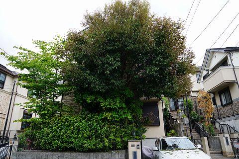 20170514 庭木 03.jpg