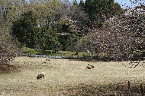 20180331 鶴巻温泉散策 35.jpg