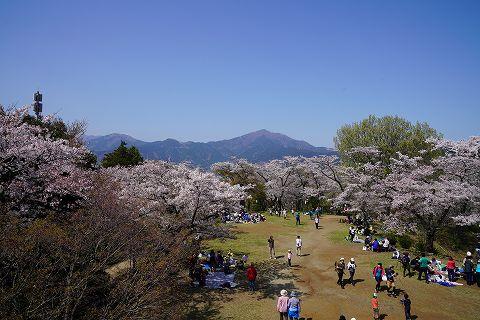 20180331 鶴巻温泉散策 49.jpg