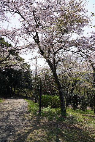 20180331 鶴巻温泉散策 51.jpg
