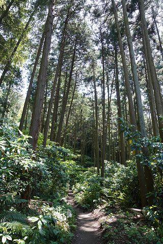 20180428 鎌倉散策 07.jpg