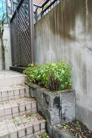 20181108 庭木 22.jpg