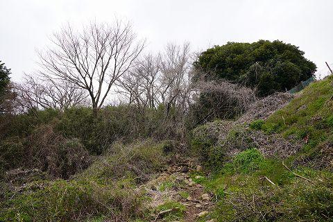 20190316 湯河原散策 17.jpg