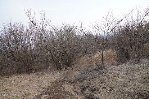 20190316 湯河原散策 67.jpg