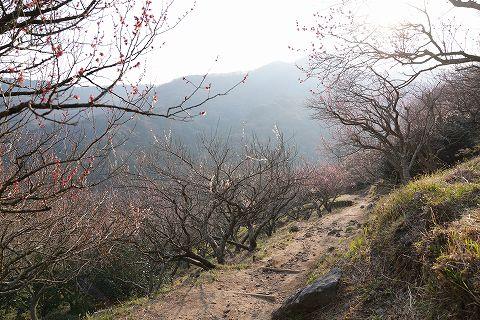 20190316 湯河原散策 76.jpg
