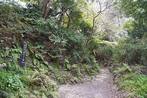 20190330 鎌倉散策 24.jpg