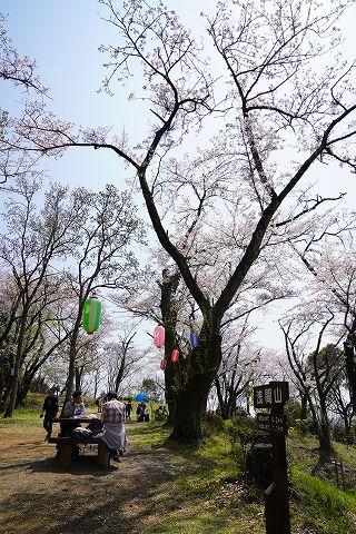 20190406 秦野散策 16.jpg